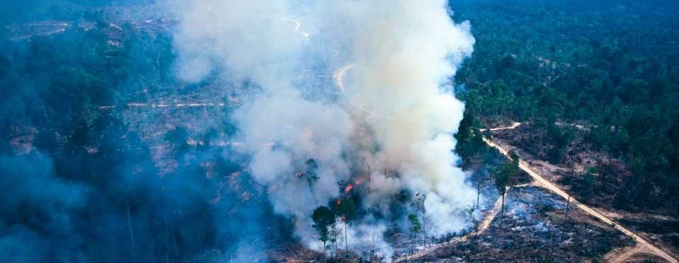 Skog, klimat och fattigdom hänger ihop