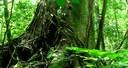 Ekosystem i klimatets tjänst