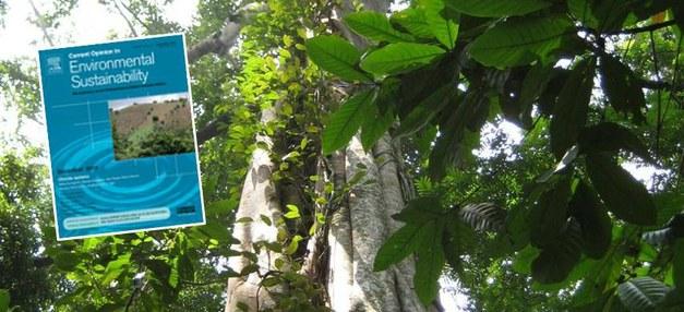 Ett nytt nummer av Current Opinion in Environmental Sustainability med fokus på REDD+